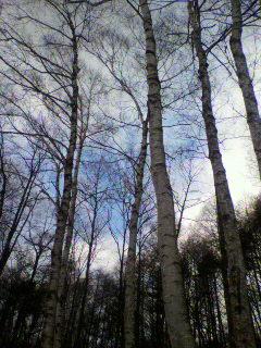 image/2012-02-04T08:41:42-1.jpg