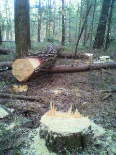 image/2012-03-30T19:35:51-2.jpg